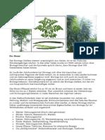 Moringa - Die Vitaminreichste Pflanze Der Erde