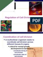 Mitosis Regulation