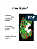 4 Enzymes Powerpoint