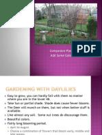 companion plants for daylilies