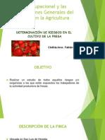 PSO en El Cultivo de Fresa