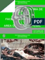 Presentacion Delitos Contra La Vida Temario Penal Especial