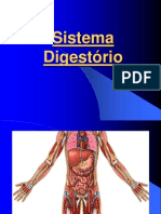 1.4 - Sistema Digestório