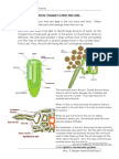 Active Transport in Root Hair Cells.doc