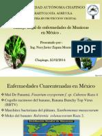 Manejo Legal de enfermedades de Musáceas en México