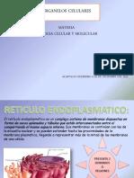 BIOLOGIA ORGANELOS CELULARES