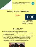 Proiect Trufe Popa Andrada