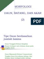 Anatomi Dan Morfologi Tumbuhan