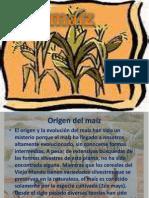 diapositivas del maiz.pptx