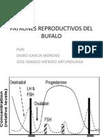 Patrones Reproductivos Del Bufalo