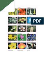 florais califórnia