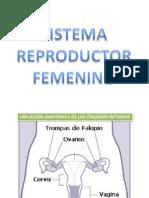 Clase de Sistema Reproductor Femenino