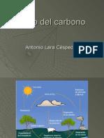 Ciclo Del Carbono1457