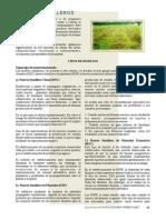 Manual Tecnico Huerto Semillero
