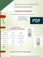 Características generales de moscas corregido