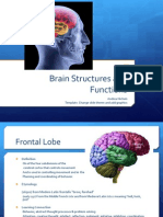 The Brain (powerpoint)