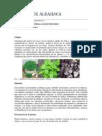 Cultivo de albahaca.pdf