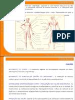 03 Sistema Muscular