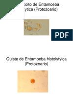 Identificacion de Parasitos