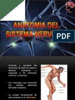 Anatomia Del Sistema Nervioso Final