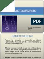 Clase 2 Gametogénesis 2014