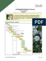 Familia de las crucíferas (Brassicaceae)