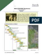 Familia de las gramíneas (Poaceae)