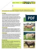 Cattle Breeding