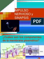 Impulso Nervios y Sinapsis