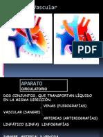 Vascular Angiografias