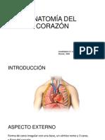 Anatomia Fisio Log i A