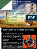 Biomecanica Del Miembro Inferior (Cadera)