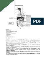 Sistema Digestivo Pp