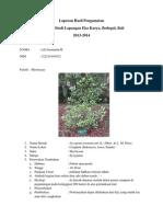 Laporan Hasil Pengamatan Syzygium Aromaticum