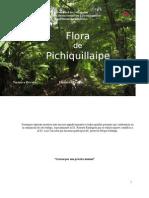 Flora de Pichiquillaipe, Parque Katalapi, X Región, carretera austral