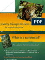 Rain Forests- Powerpoint