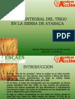 Manejo Integral Del Trigo en La Sierra De
