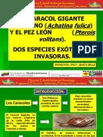 El CARACOL GIGANTE Y EL PEZ LEÓN