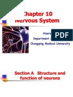 Nervous System -1