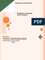 Sistematica Nevertebratelor -proiect