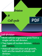 6. Cell Cycle