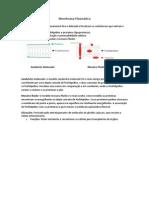 1º Semestre - Biologia I - Aula II - Membrana Plamática e modelos de M.P