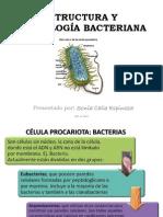 Estructura y Morfologia Bacteriana (1)