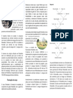 Folder Girolando Rondonia