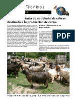 lacabra - Gestión Sanitaria de un rebaño de cabras de carne[
