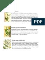 Plantas Comestibles y Ornamentales