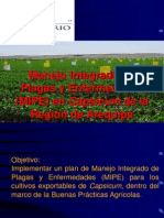 1. Manejo integrado de plagas y enfermedades - Fundo don Mario.pdf