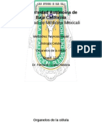 ORGANELOS1a