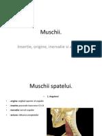 Muschii.