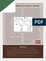 Body Condition Scoring in Horses